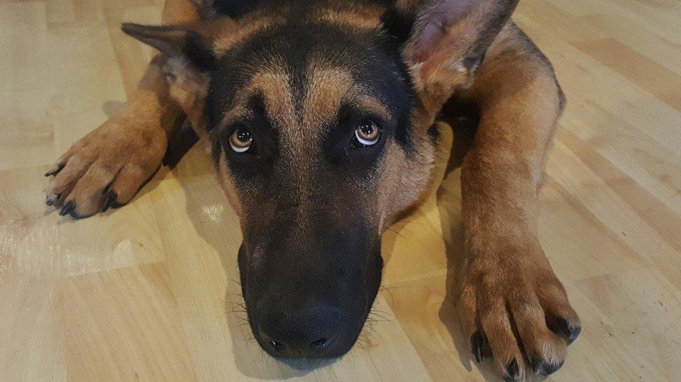 I velký pes může mít velký strach