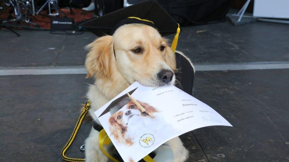 Pes bakalář