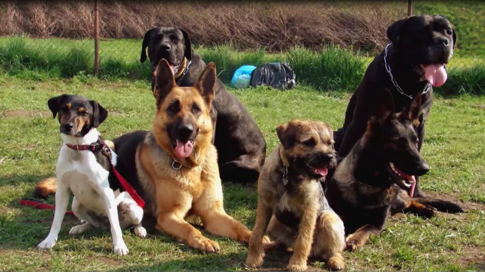 Socializace psa v kolektivu je důležitá