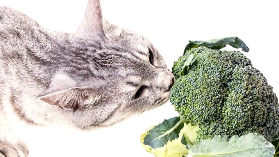 4 chyby, které při krmení koček děláme: snažíme se kočky udělat vegetariánku
