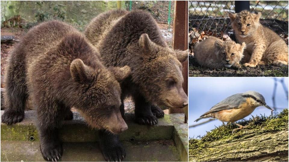 Kam na výlet: Pestrá nabídka pro milovníky zvířat