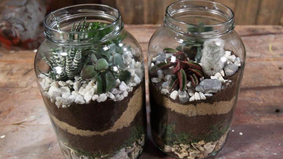 kaktusy ve skle