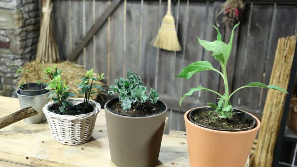 Jak se vyznat v rostlinách s exotickými jmény 1