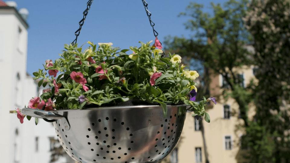Jak pěstovat květiny v zavěšeném cedníku 1