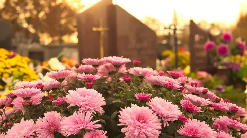 Hřbitovní kvítí má svou stálici - chryzantému