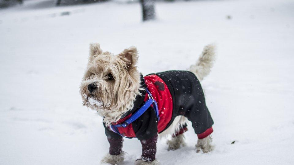 Obleček chrání psa před zimou i vlhkem