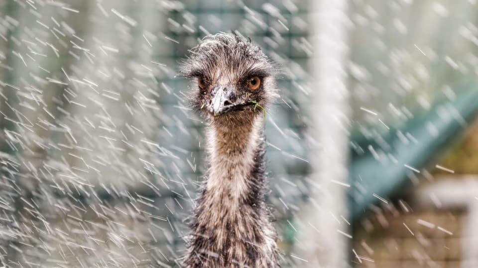 Přání pro šťastný život emu Amu 2