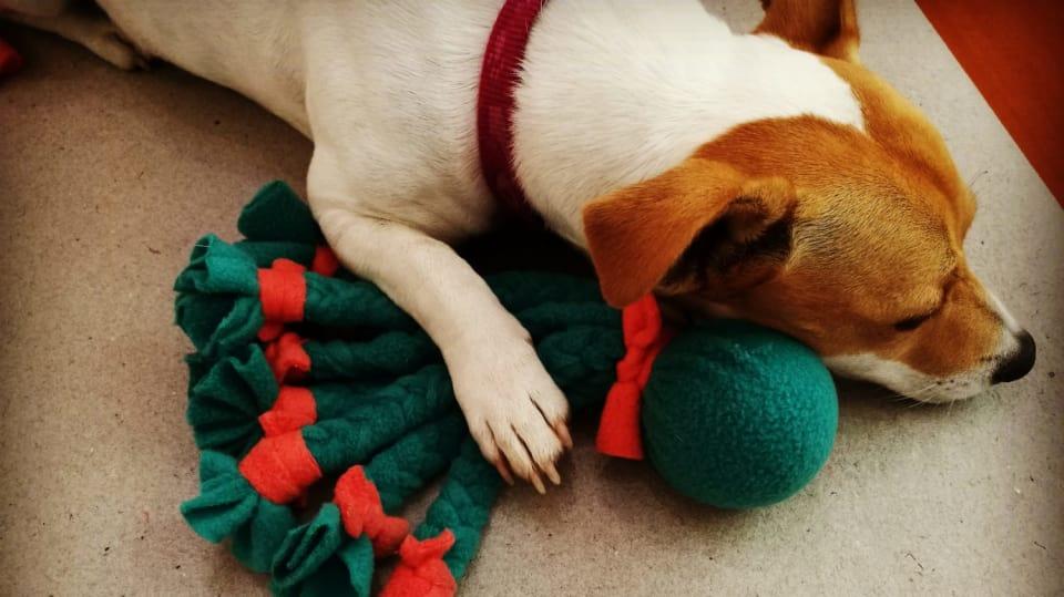 Jak zabavit hravého psíka 11