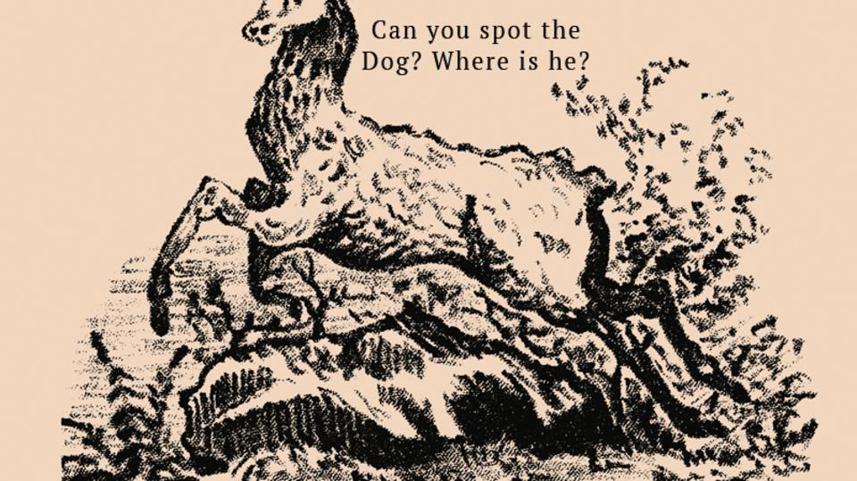 Najdete na obrázku ukrytého psa?