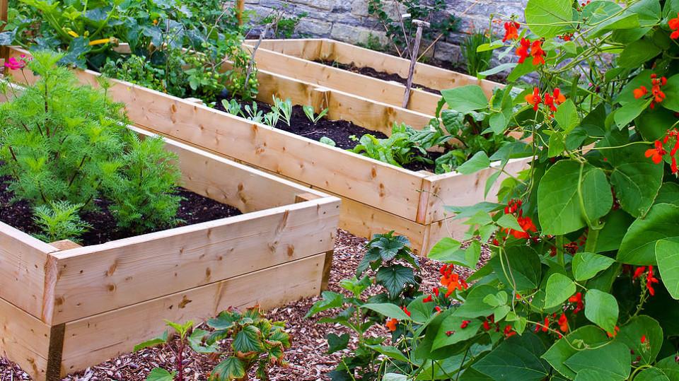 Jste začínající zahradník a chcete pěstovat zeleninu? Máme pro vás 6 tipů, jak na to