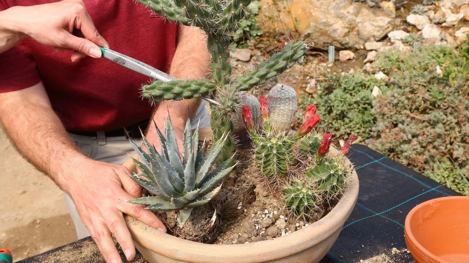Jak vytvořit z kaktusů dekorativní aranžmá: Zahrádka v květináči 1