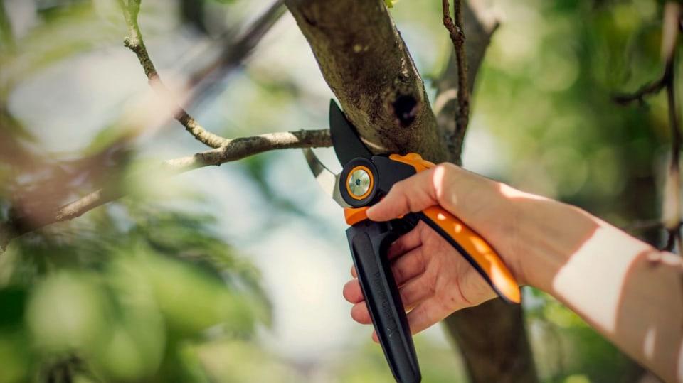 Zimní řez jabloní a hrušní musíme stihnout do rašení: nůžky zahradní převodové dvoučepeleové