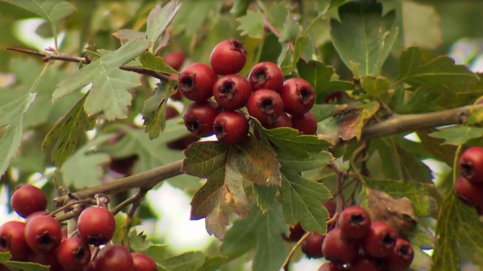 Podzimní plody 2