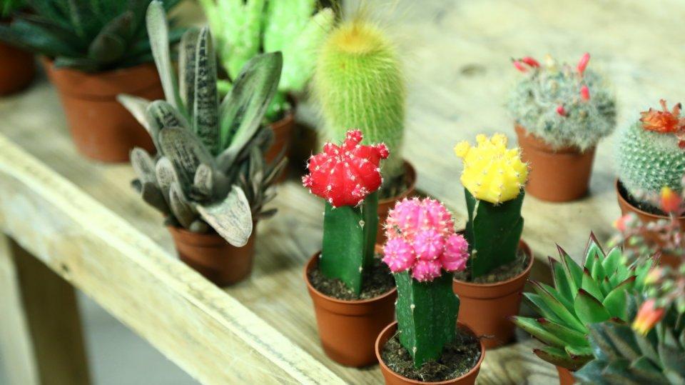 Rostliny pro dětské zahradničení: Ukažte dětem radost z vlastnoručně pěstovaných květin
