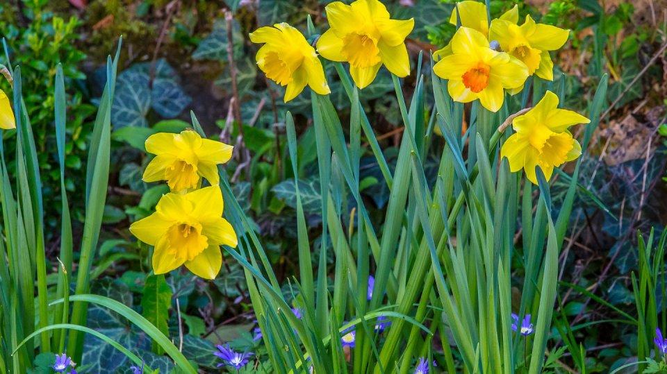Kalendář pro zahradníky: Březen 1