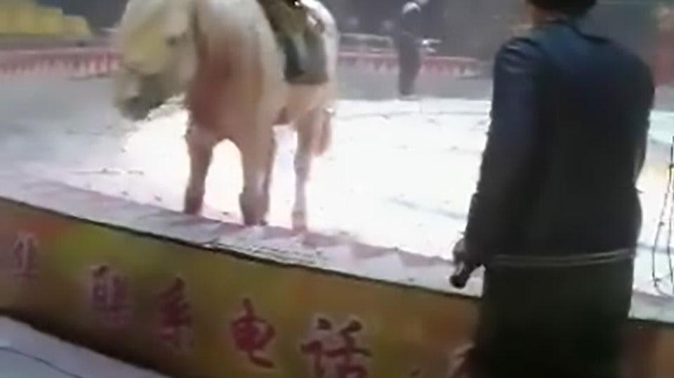 Brutální útok divokých zvířat zavřených v cirkusu