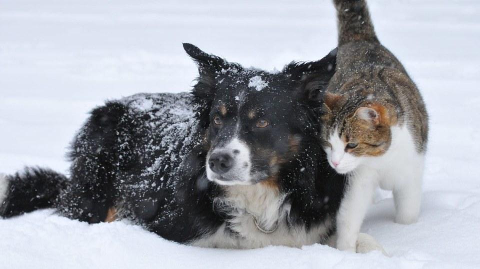 Zima bývá občas ke zvířátkům krutá