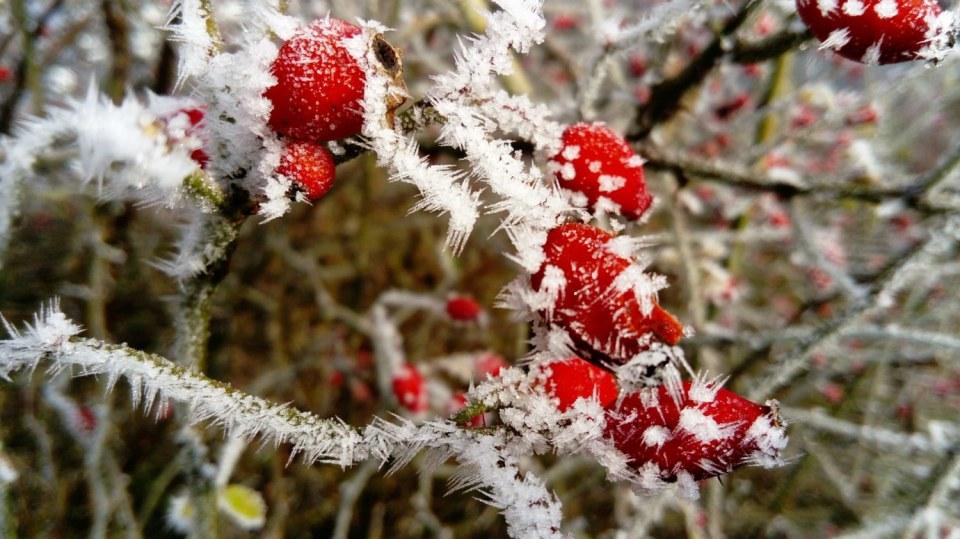Leden v lidové meteorologii: zima vrcholí