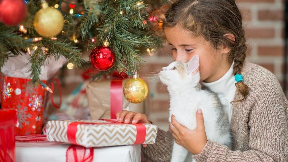 Jaký vánoční dárek by si asi přála vaše kočička?