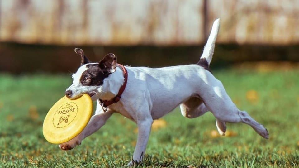 Jak zabavit aktivního psího kamaráda 2
