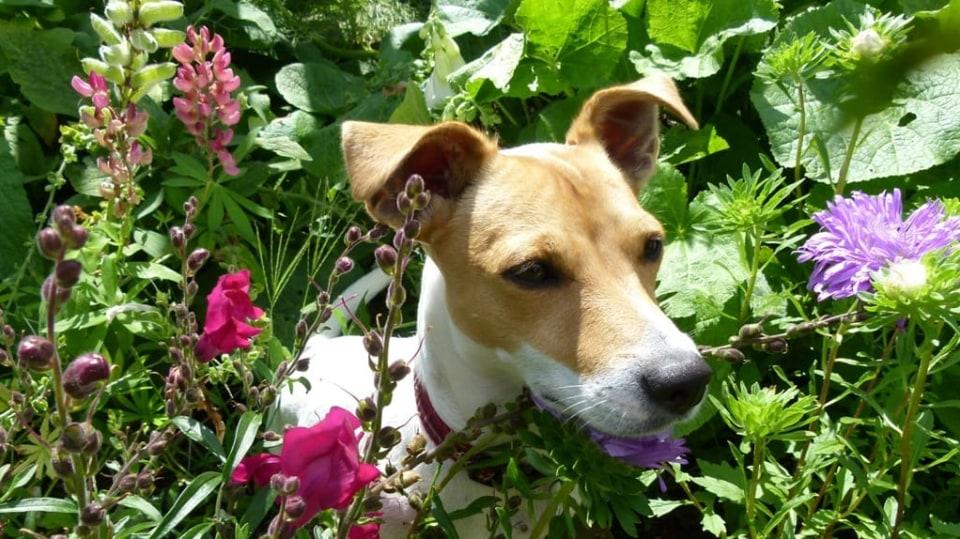 Zahrada i pro psa  1