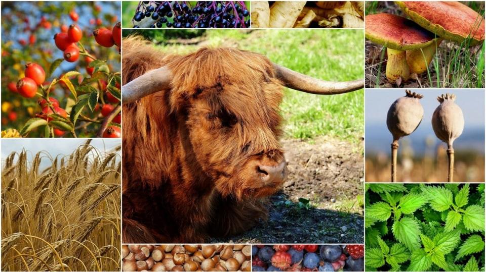 Pravěká dieta aneb Víte, proč jíst jako lovci mamutů?