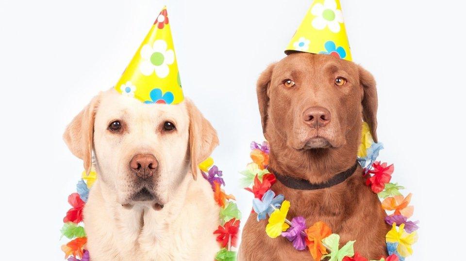 Ne každý pes s námi chce sdílet silvestrovskou oslavu