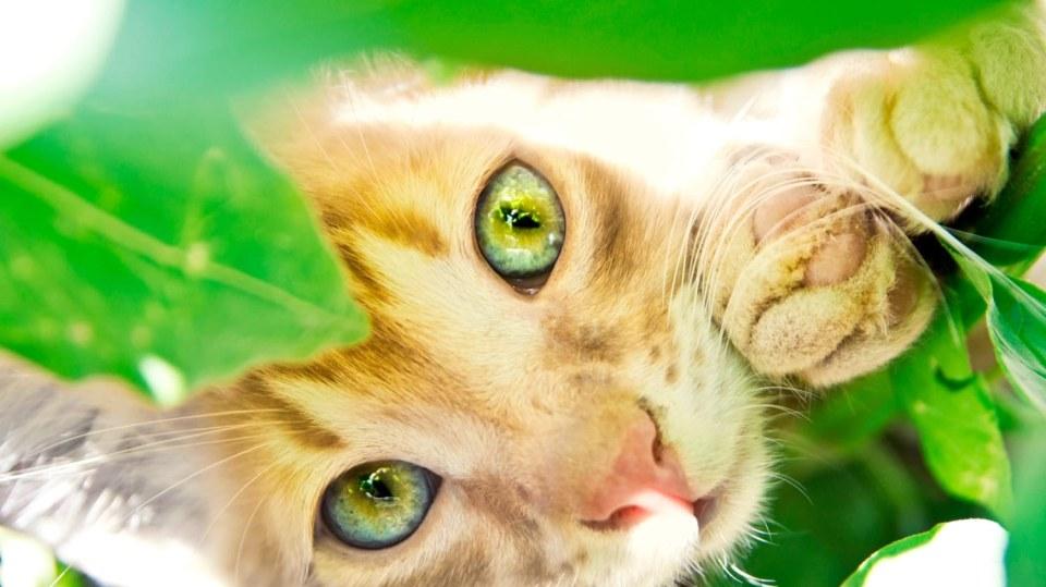 Víme, které pokojové rostliny nebezpečné pro kočky a co dělat, když už dojde k otravě
