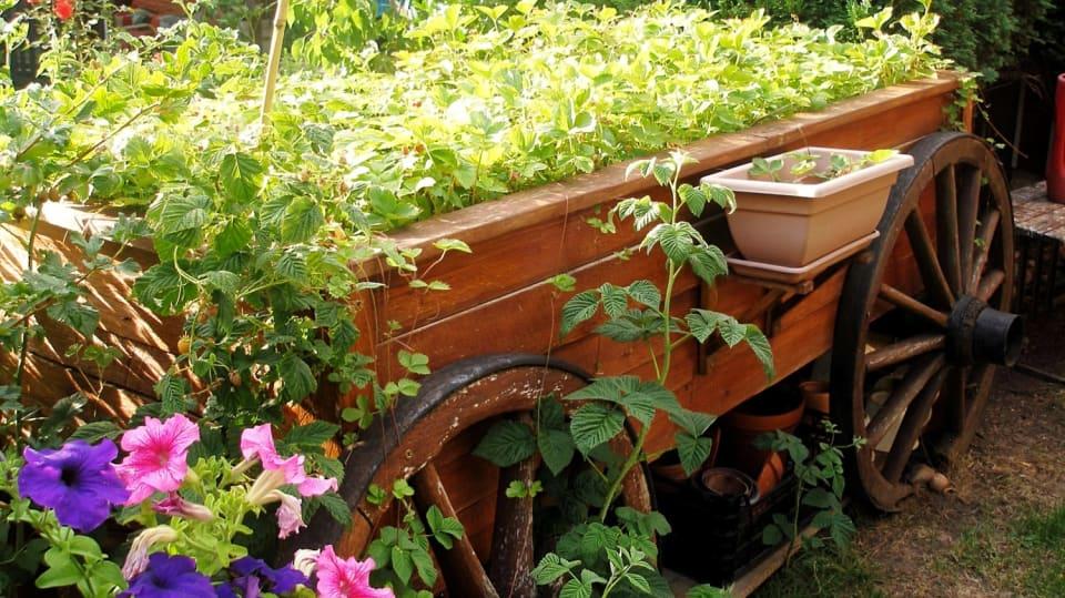 Jahodovník v podobě selského vozu