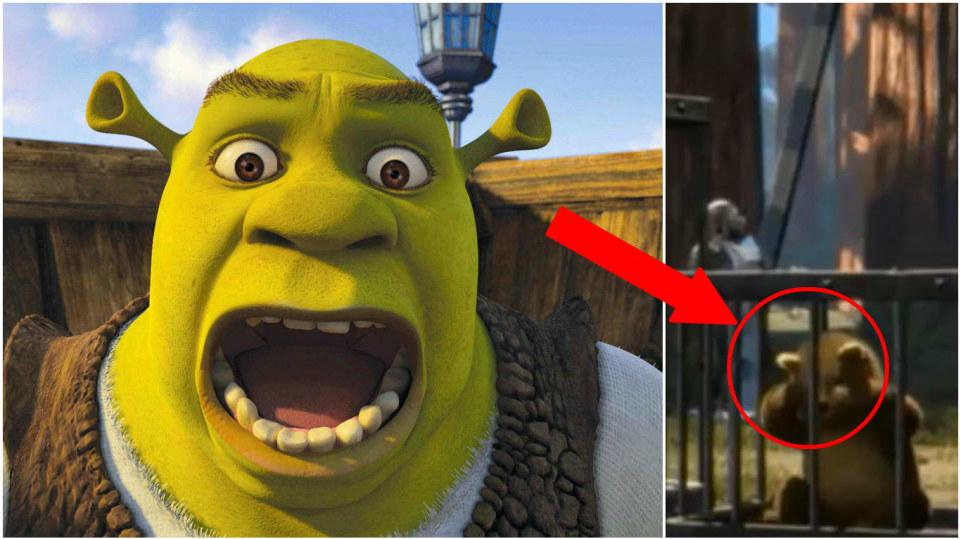 Shrek a děsivá scéna 1