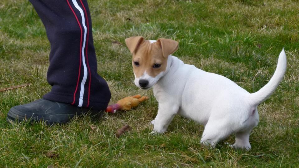 Výchova psa aneb Pět zásad pro základní výcvik čtyřnohého přítele 1