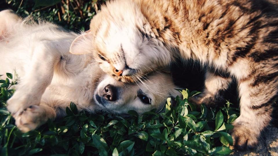 Věrní přátelé: kočka a pes