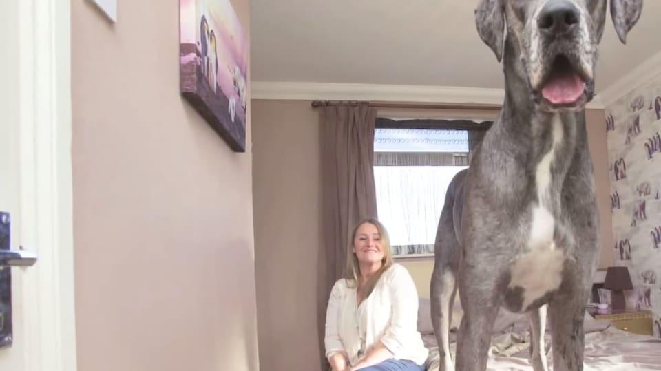 Největší pes světa
