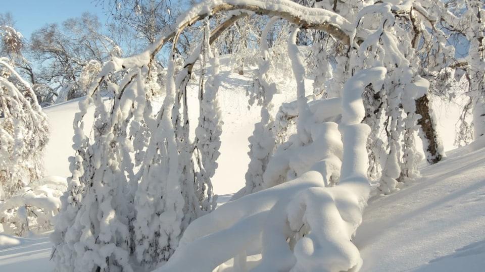 Leden v lidové meteorologii: průměrné teploty padají ke svým minimálním hodnotám