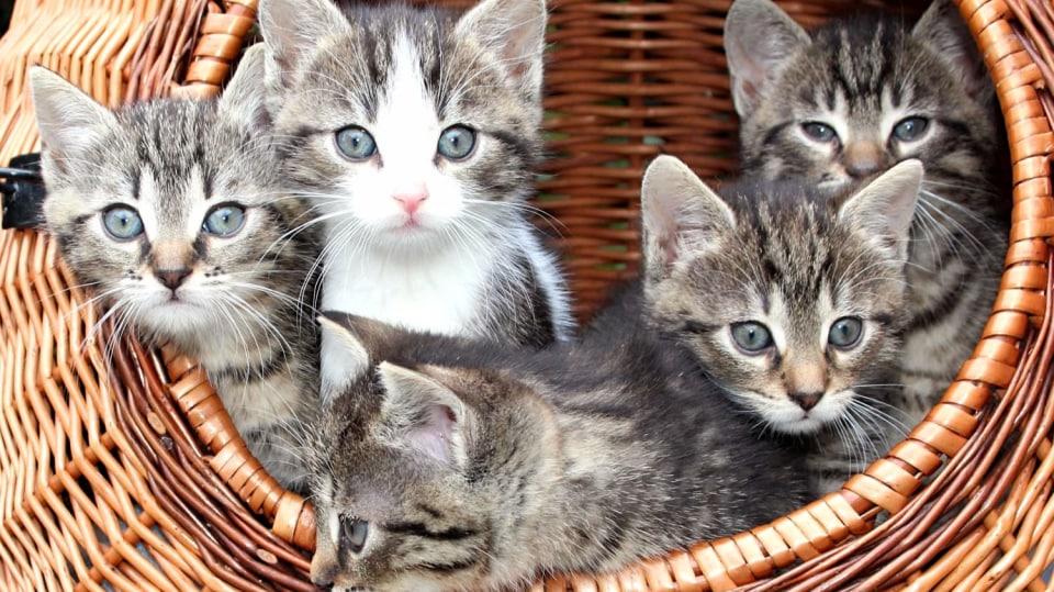 Jak se postarat o kotě
