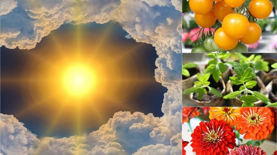 Předpověď počasí na první květnový víkend: Co dělat na zahradě Předpověď počasí na třetí květnový víkend 19. a 20. 5.: Co dělat na zahradě