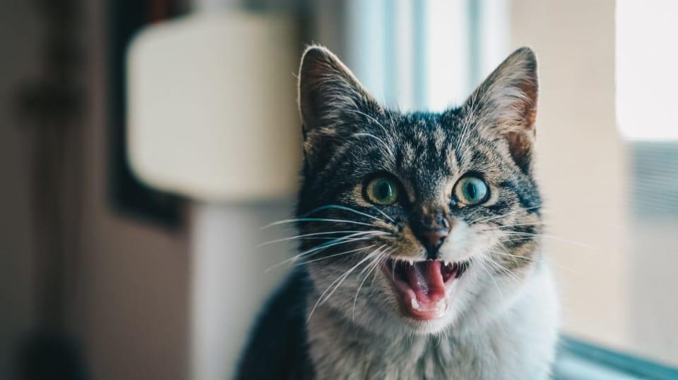 Jak se správně starat kočce o zuby a dásně 1