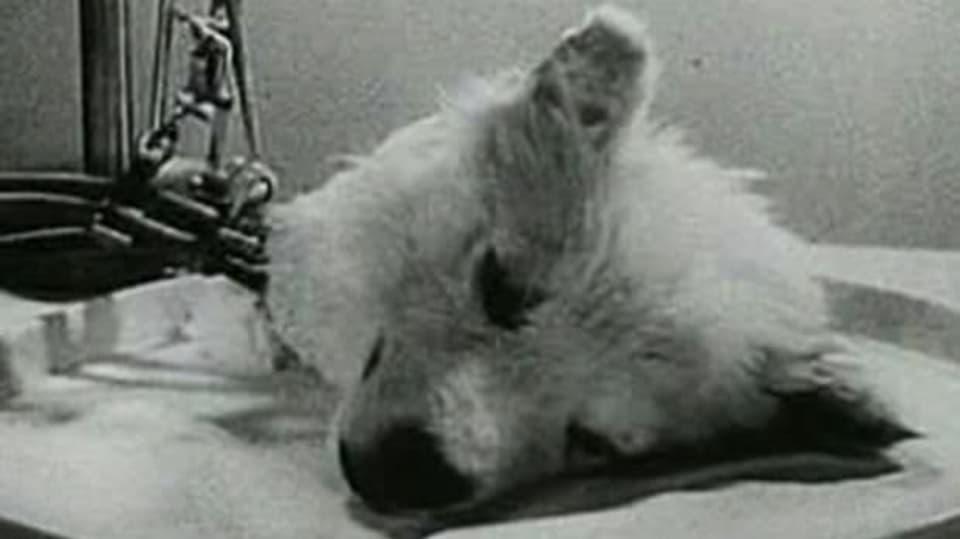 Experiment 1940