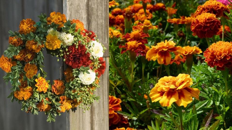 Afrikány skvěle ozdobí i vaše podzimní dekorace