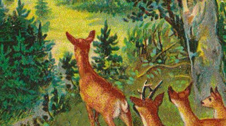 Optická hádanka - jeleni a lovec 3