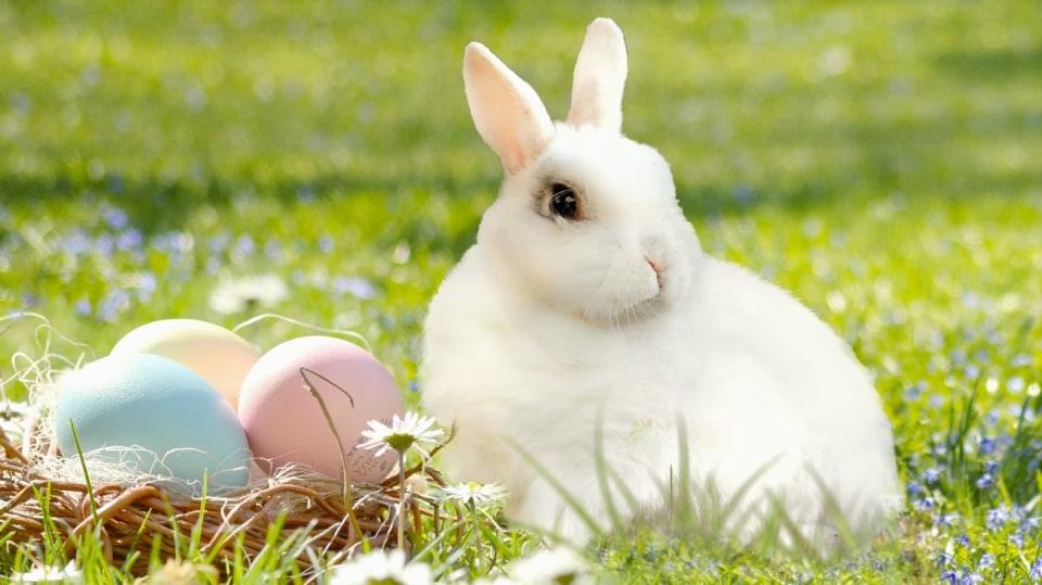 Velikonoční zajíček v hlavní roli: 11 prima nápadů na veselé jarní dekorace