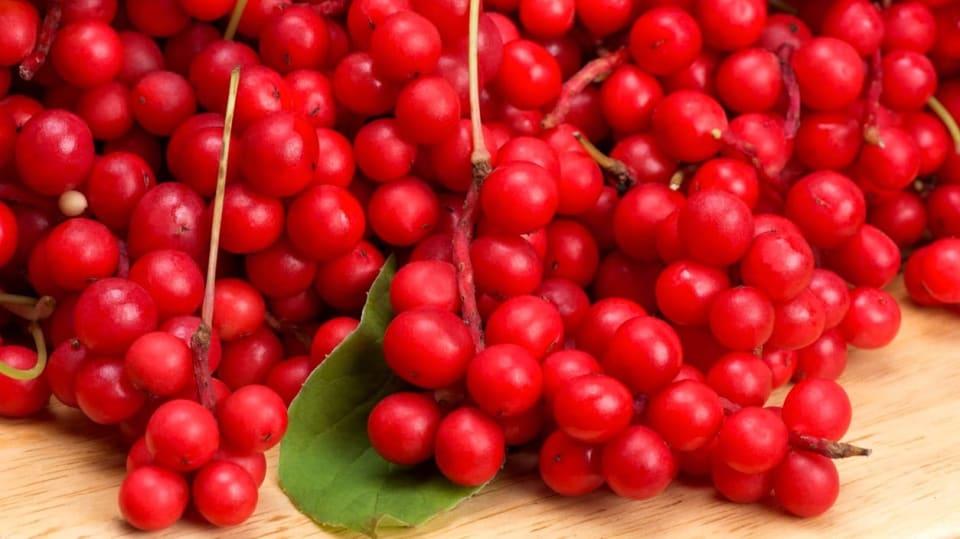 Jak pěstovat bylinu mládí, svěžesti a dlouhověkosti 1