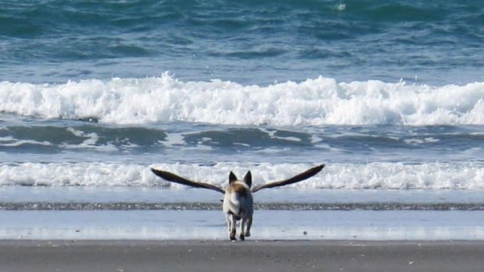 Na Novém Zélandu objevili nový živočišný druh - ptákopsa