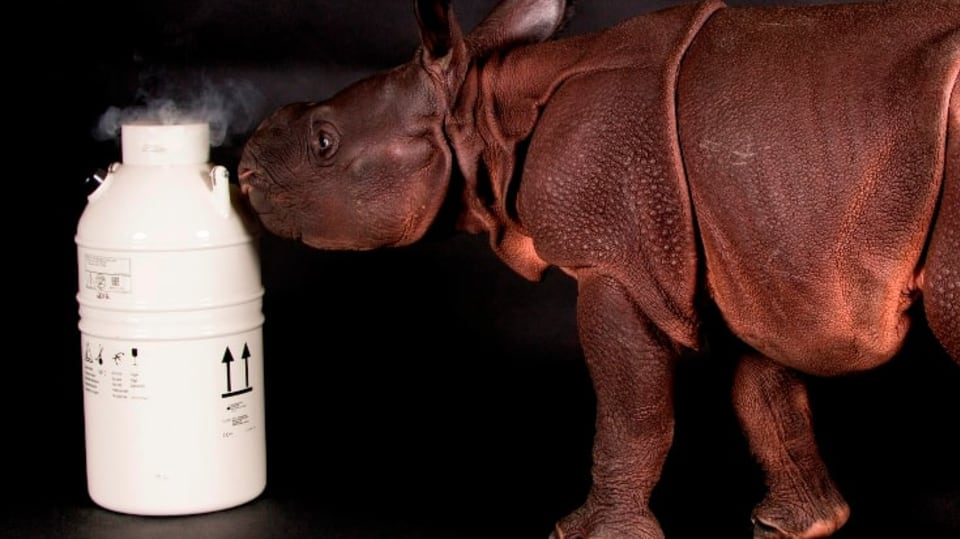 Nosorožče ze skumavky