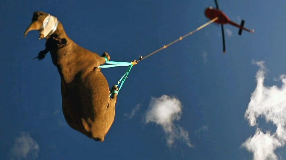 Záchrana nosorožců - Obrázek 1