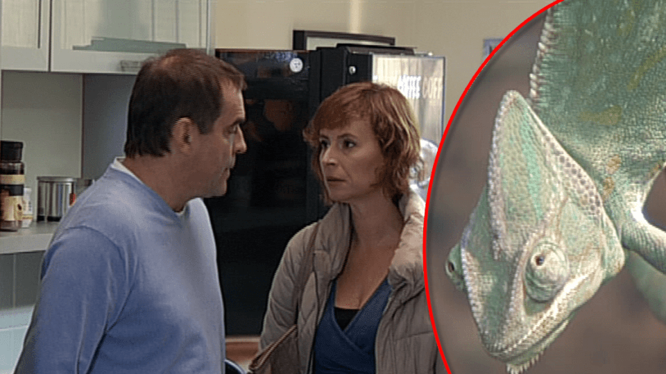 Jednou ze živých rekvizit seriálu Cesty domů je i tento chameleon