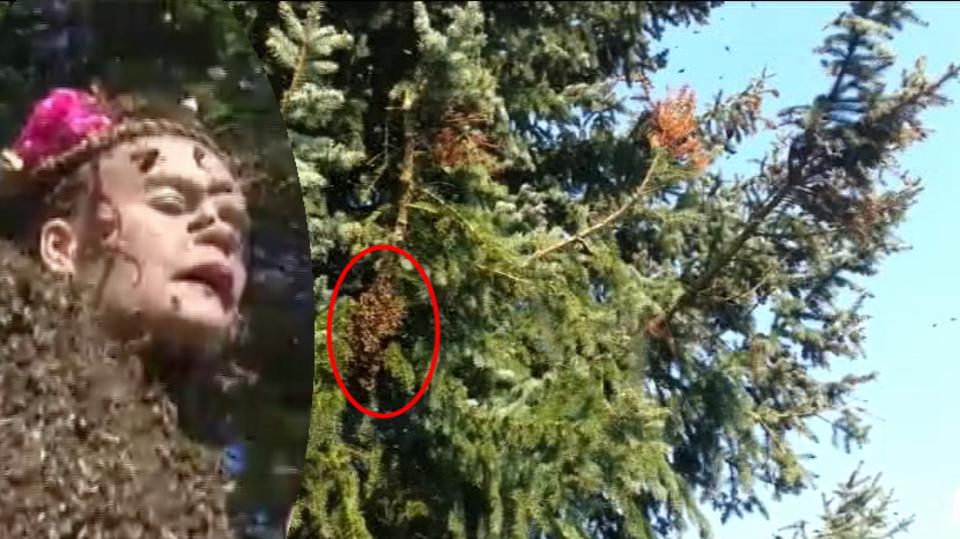 video Divácké zprávy: Včely si udělaly výlet!