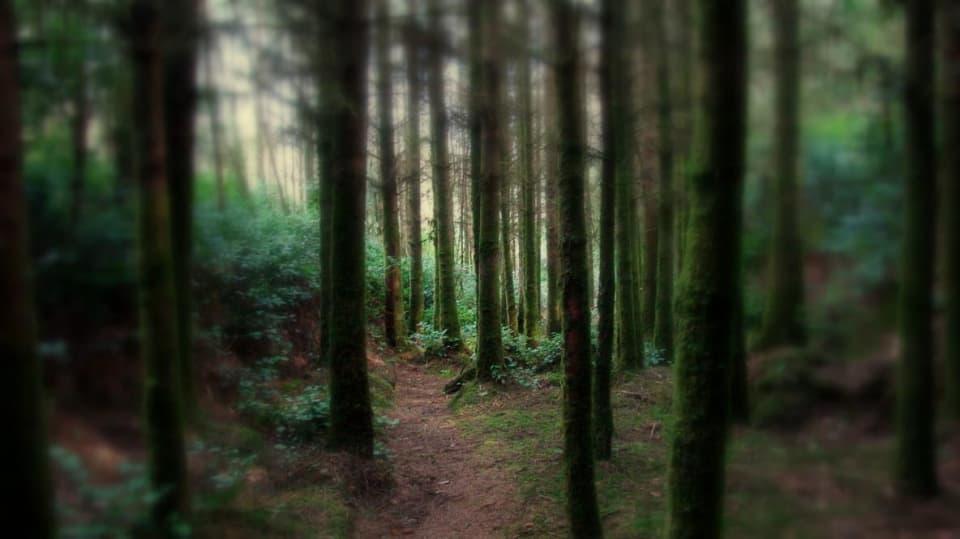 Tajuplné lesy