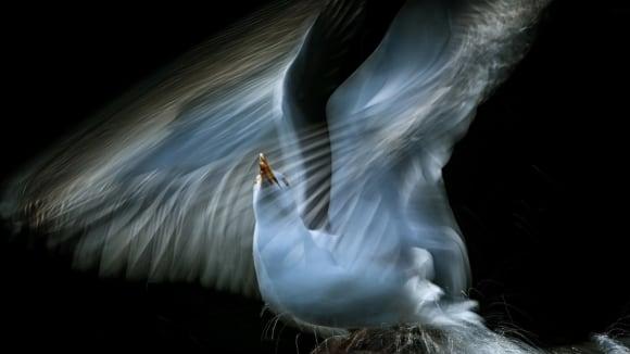 Oceněný snímek v kategorii ptáci