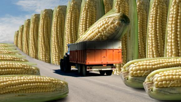 Geneticky upravené potraviny